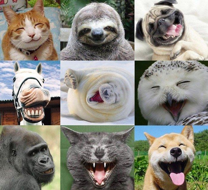 Эмоции животных в рисунках и фотографиях проект