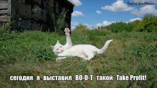 TEIK-PROFIT.jpg