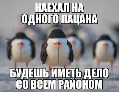 1536865107115399004.jpg