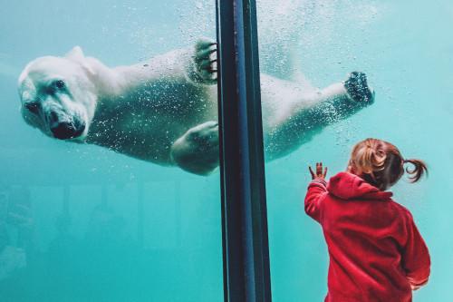 animal-aquarium-child-1639949.jpg