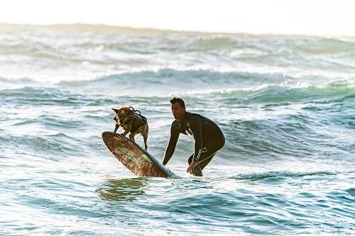 action-leisure-ocean-1654493.jpg