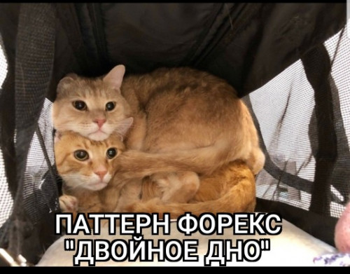 ZomboMeme-24022019205751.jpg