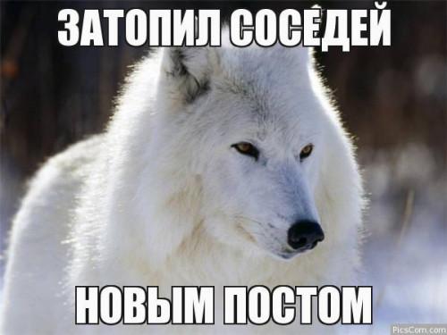 73331566362061.jpg