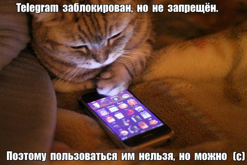 PRO-TELEGRAM.jpg